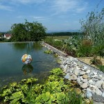 piscine bio 2 di luca paysagiste