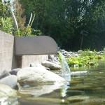 piscine bio 6 di luca paysagiste